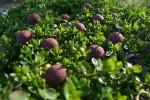 KOKpro v bujaré jarní zeleni