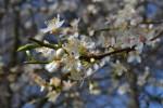 Jaro pozvolna přichází